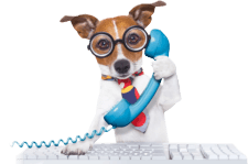 Jack russell dog on phone
